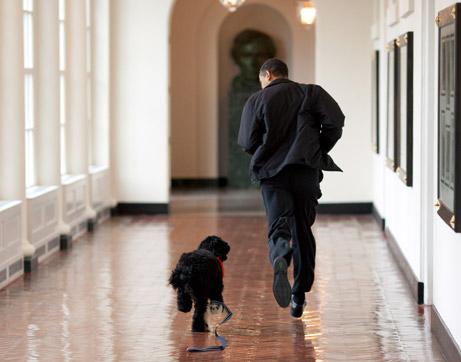 090414-obama-dog-picture_big